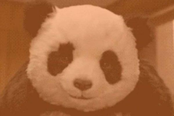 Traffic Chaos! Google & Facebook Changes Wreak Havoc On Business panda 5 » November 21, 2019